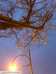 Gramado- Foto- Rozangela Allves